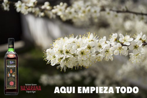 Endrino de la Bodega en flor